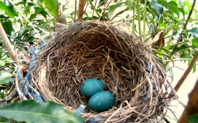 We Cannot Doubt: Poetry and an Easter Reflection