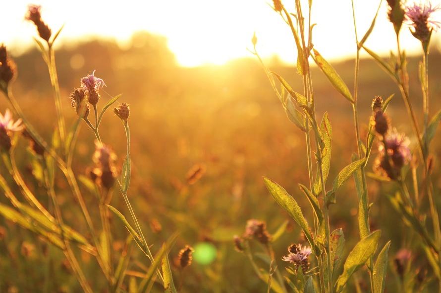 Lenten Reflection: Something New